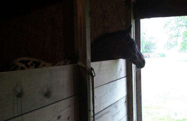 Scribbles in the barn
